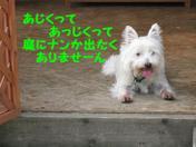 20080903_0111