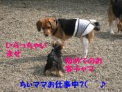 20080903_0114