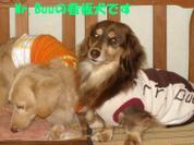 20081102_0224