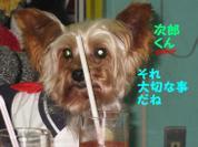 20081109_0254