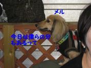 20081109_0255