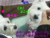 20081109_0265