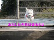 20081123_0314