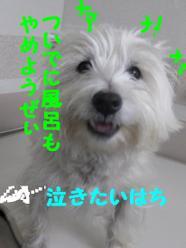 20090106_0565