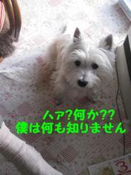 20090225_0602_2