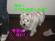 20090326_0681