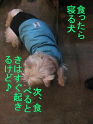 20090413_0764_2