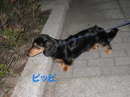20090520_0955