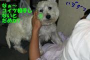 20090804_1194