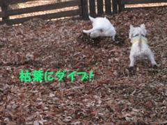 20091201_1635_3