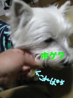 20091205_1686