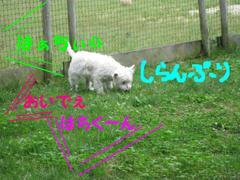 20100627_2430