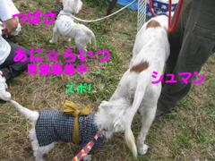20101107_2883