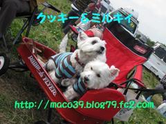 20101107_2886