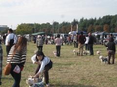 20101107_2911