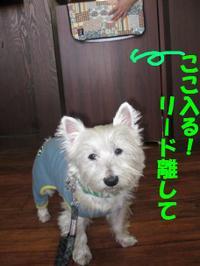 20101214_3093