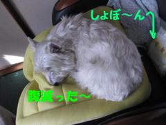 20101224_3115_2