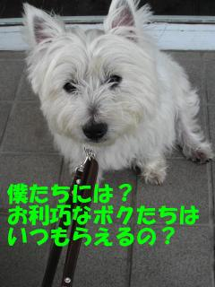 20110610_3198