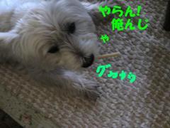20110813_3257_2