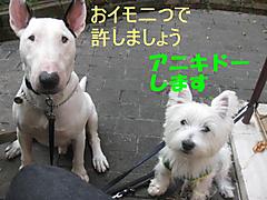 20111007_3365