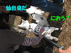 20111113_3455