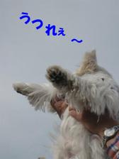 20111113_3464_2